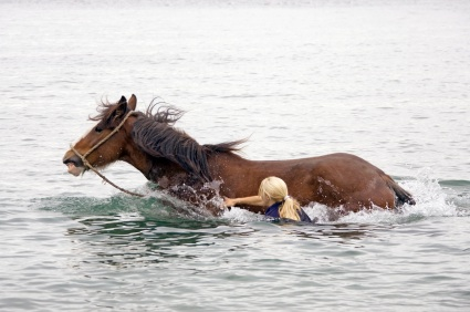 crowdfunding campaign change-horses-midstream